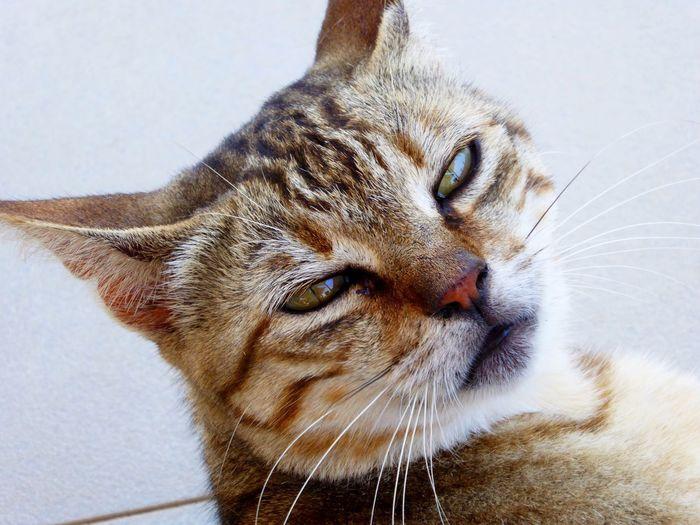 Cat Cats Cats Of Castellorizo Castellorizo Cat Selfie... Cat Selfie Catselfie Go Away Leave Me Alone Catslife Cats Life Cat Lover Cat Love Cat Life Kastellorizo