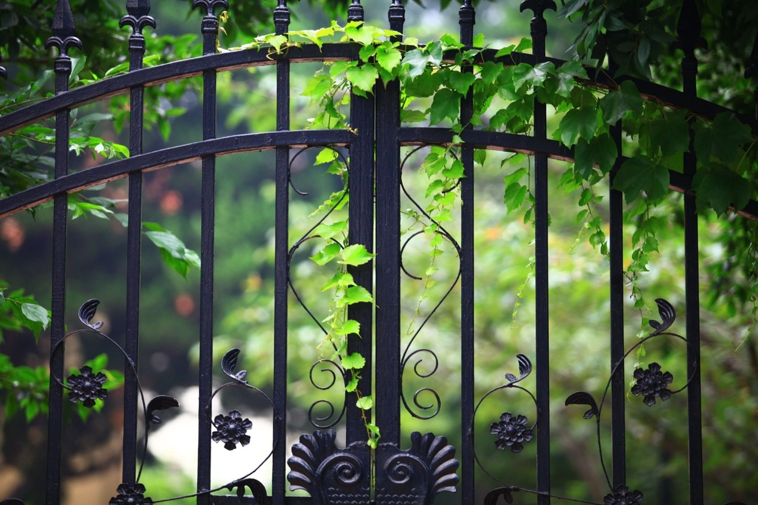 green color, fence, growth, tree, metal, plant, chainlink fence, park - man made space, protection, day, nature, safety, focus on foreground, indoors, leaf, close-up, gate, sunlight, pattern