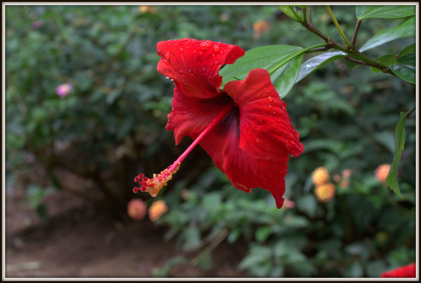 Flaura and Fauna of Alcudia Macro Flower Macro Nature Macro Hibiscus Hibiscus 🌺 Green Color Growth Plant Tree Beauty In Nature, Branch Branches And Leaves Close-up Day Flaura And Fauna Flaura And Fauna Of Alcudia Flower Head Flowers Fragility In Nature Leaf Nature No People Outdoors