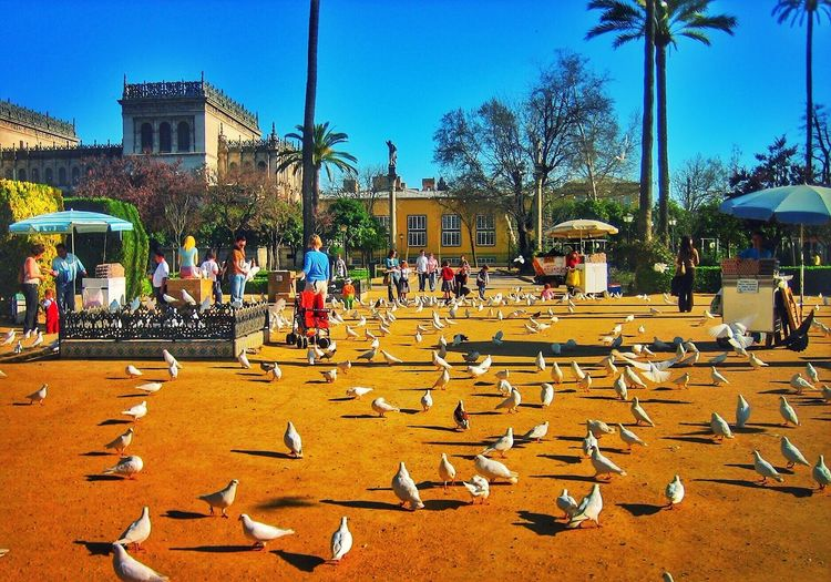"Birds Park. ""Being able to capture a photo that tells a story on each subject and as a whole."" 43 Golden Moments Sevilla SPAIN Streetphotography Taking Photos Urban Landscape Sunny Day Relaxing Poster It Architecture Birds Peoples Kiosk Palm Trees Plaza Green Blue Sky Clear Sky"