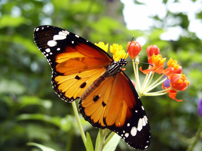 Butterflies in nature sometimes intersect with humans, caught in the moment. Butterfly ❤ Endangered Species Feeding  Life Nature Animal Themes Beauty In Bugs Close-up Colorful Day Insect Nektar Patterns I See Springtime