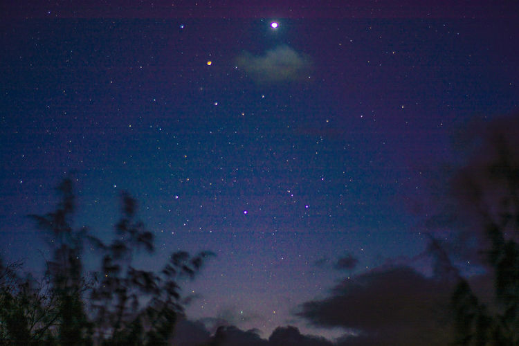 Stary night Astronomy Beauty In Nature Comets Constellation Enjoying Life Galaxy Low Angle View Milky Way Nature Night No People Outdoors Planets Scenics Sky Space Space And Astronomy Space Exploration Star - Space Star Field Star Trail Taking Photos Tree