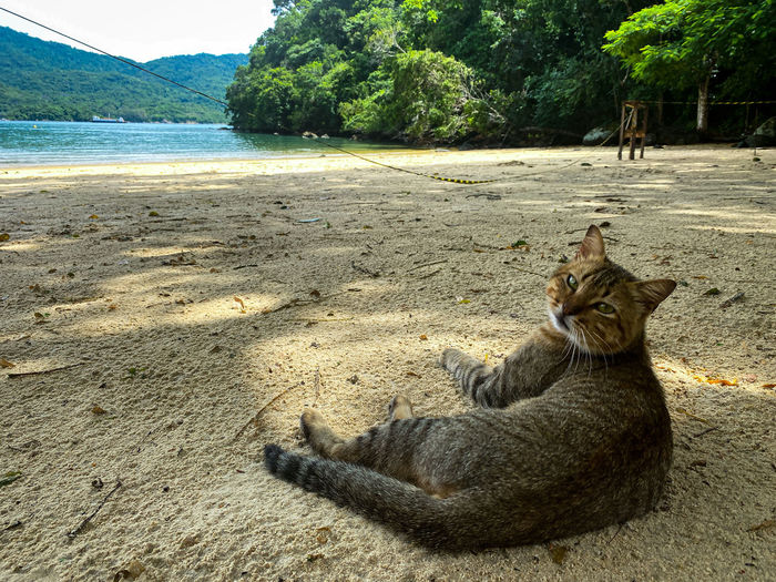 Cat relaxing on a land