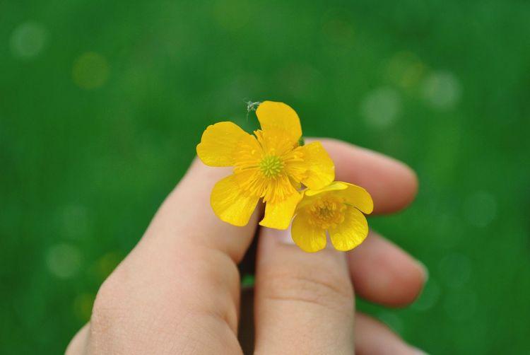 🌼 Springtime
