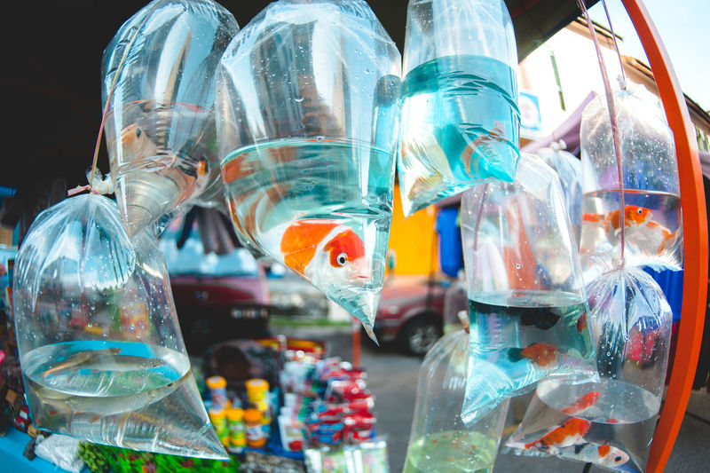 Fishes in plastic bags hanging at market for sale