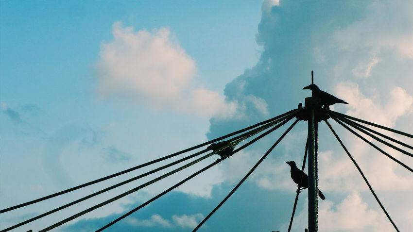 crows having fun .. Birds Blue Cable Cloud Cloud - Sky Cloudy Connection Crow Development Dusk Electricity  Electricity Pylon Engineering Environmental Conservation Light Low Angle View No People Outdoors Overcast Pole Power Line  Silhouette Sky Technology Tadaa Community