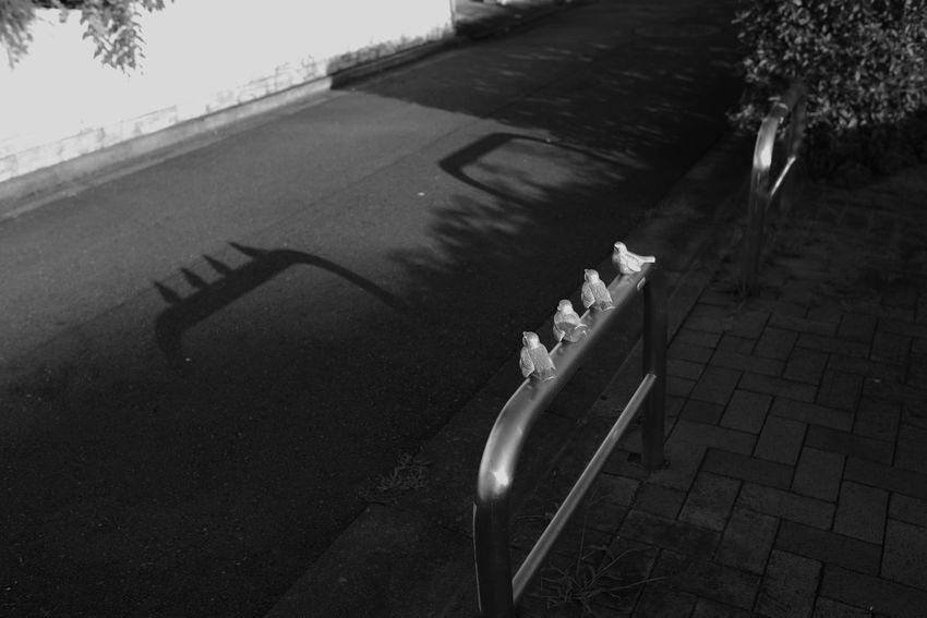 Blackandwhite Nature Transportation Day Shadow High Angle View Sunlight No People