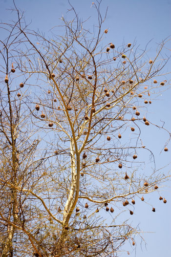 Bird Nests near