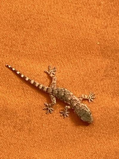 High angle view of lizard on floor