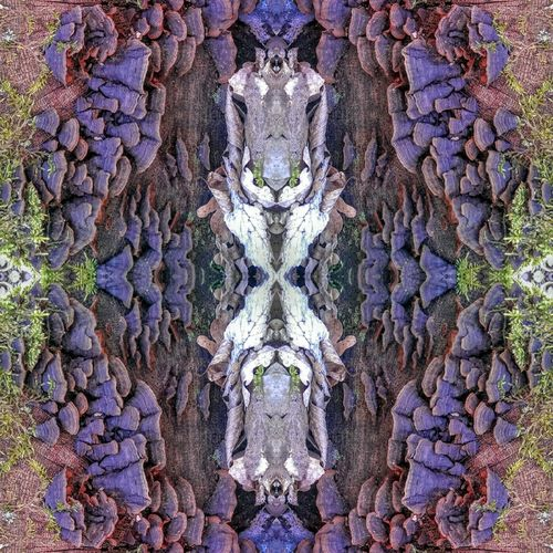 Lord Of The Mushrooms Hi! Kurioses  Pattern, Texture, Shape And Form Structure And Nature Patterns In Nature Pattern Pieces Mirrored Mirror Effect