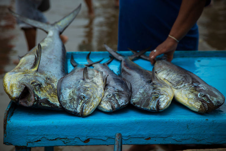 Dorado at the Puerto López fishing market. Food Food And Drink Freshness Real People Human Hand One Person Hand Raw Food Human Body Part Healthy Eating Wellbeing Preparation  Seafood Fish Men Indoors  Midsection Table Preparing Food Tray