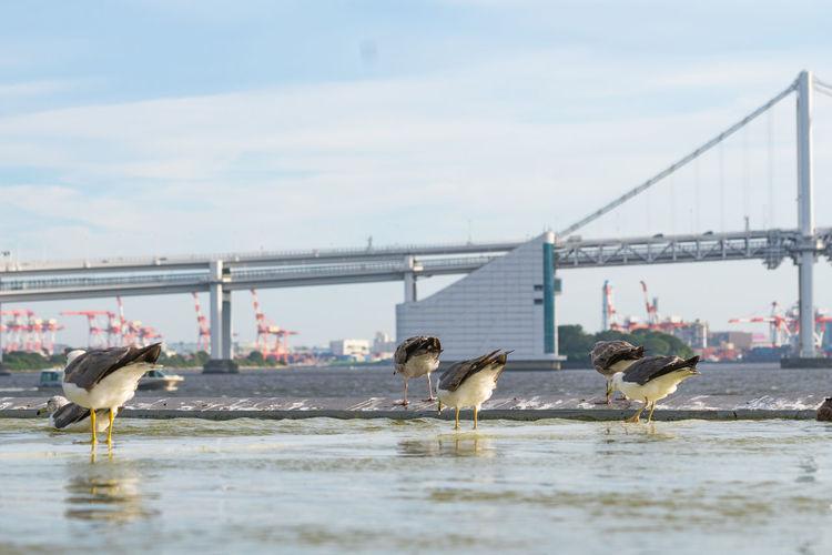 Seagulls on a bridge