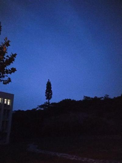 化竞 Tree Blue