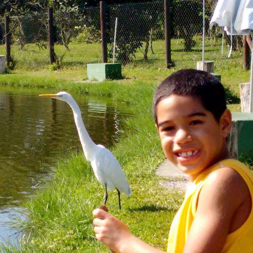 Criança,garça,passaro,pesca,natureza