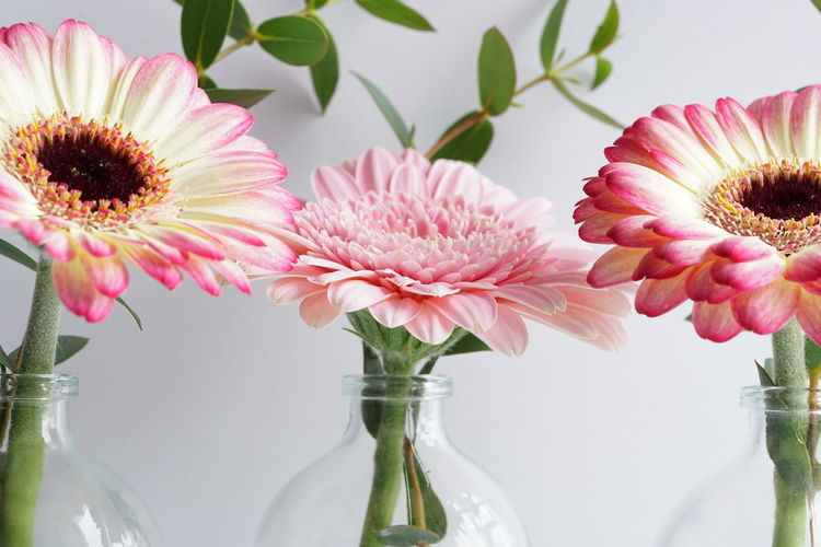 Blume Frühling Beauty In Nature Close-up Container Daisy Flower Flower Arrangement Flower Head Flowering Plant Fragility Freshness Gerbera Daisy Growth Indoors  Inflorescence Nature No People Petal Pink Color Plant Pollen Spring Vase Vulnerability