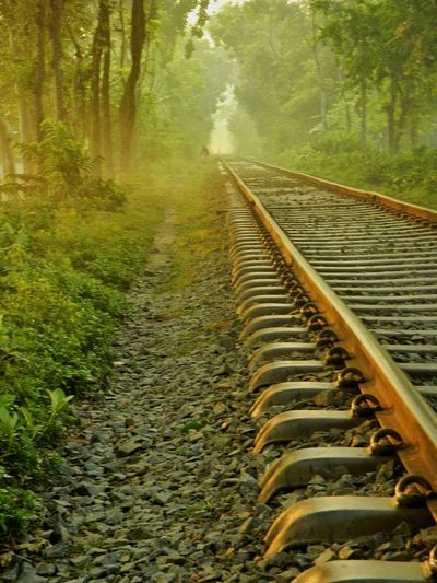 Railroad track in forest