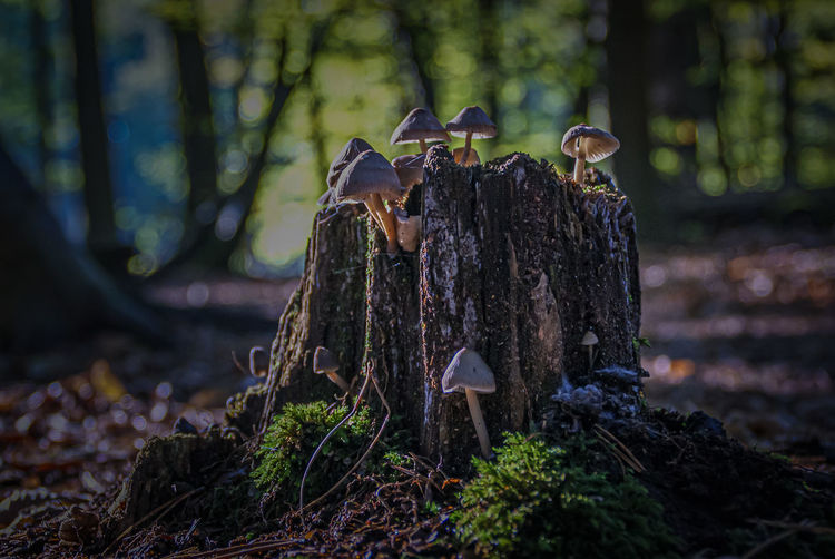View of bird on tree stump in forest