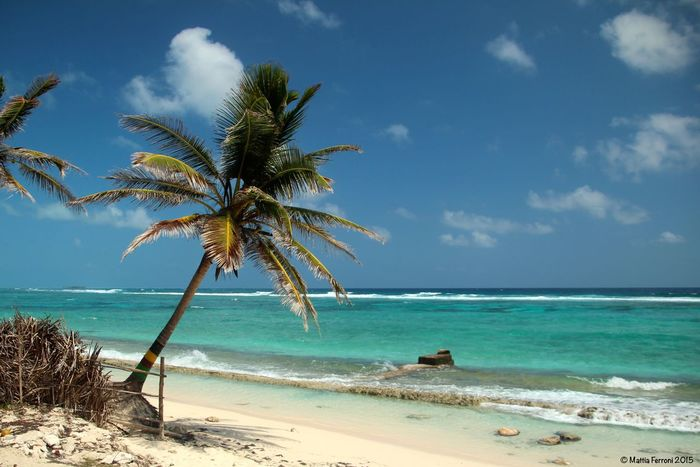 Beach Coastline Horizon Over Water Large Group Of People Mixed Age Range Ocean Outdoors Palm Tree Palm Trees Paradise Beach San Andres Island,Colombia Sand Sea Shore Summer Tourist Tropical Climate Vacation Vacations Voyage Water