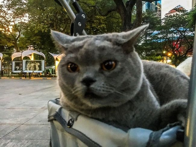 When You See Your Married Friend Dating! Pets One Animal Animal Themes Domestic Animals Eyeem Philippines