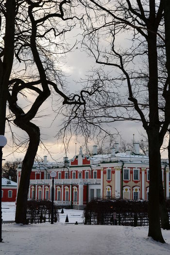 Kadriorg Palace. View from the park. Tallinn. Estonia Tallinn Tallinn Estonia Estonia Kadriorg Kadriorg Palace Park Kadriorg Palace Baltic Baltic Countries Northern Europe Building Exterior Snow Winter Architecture Cold Temperature Built Structure Building Nature Bare Tree City Tree Trunk Trunk No People Outdoors Park Tree