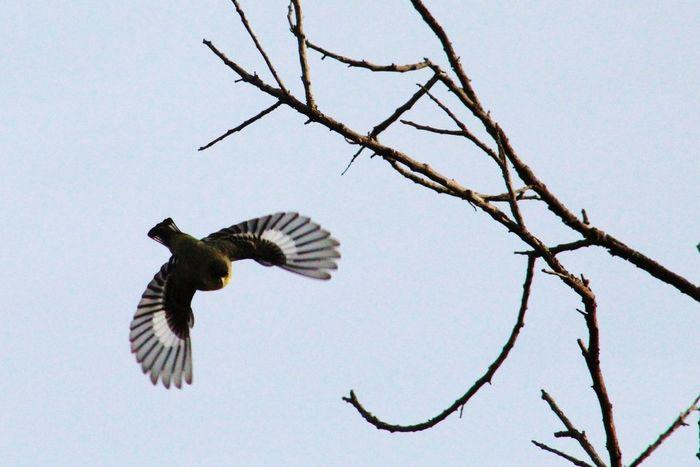 Wingspan Bird Photography Birds Of EyeEm  Birds In Flight Showing Imperfection Accidental Shot
