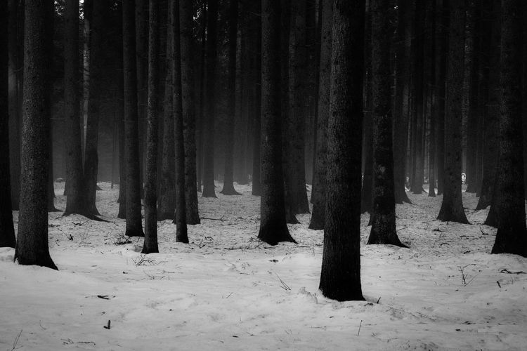 Snow Cold Temperature Tree Trunk Outdoors WoodLand Trunk Forest Tree Blackandwhite Black & White