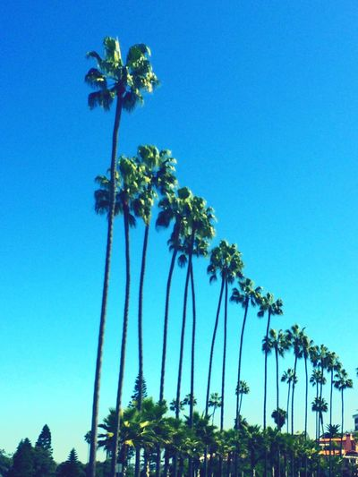 Palm Trees Beautiful San Diego Lajolla Colors Nature_collection Taking Photos Aroundtheworld Capture The Moment MyPhotography Magnifique