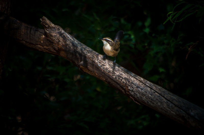 Animal Themes Animal Wildlife Animals In The Wild Bird Birds Branch Day Nature No People One Animal Outdoors Perching Tree Tree Trunk Wood - Material Woodpecker
