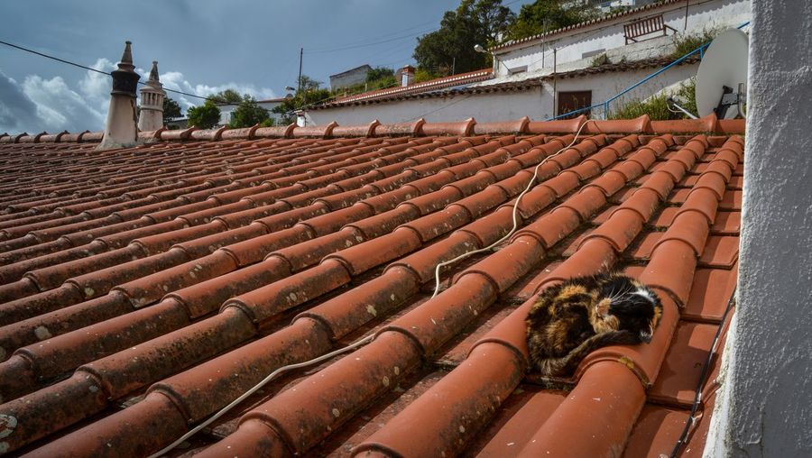 Stray cat sleeping on roof tile against sky