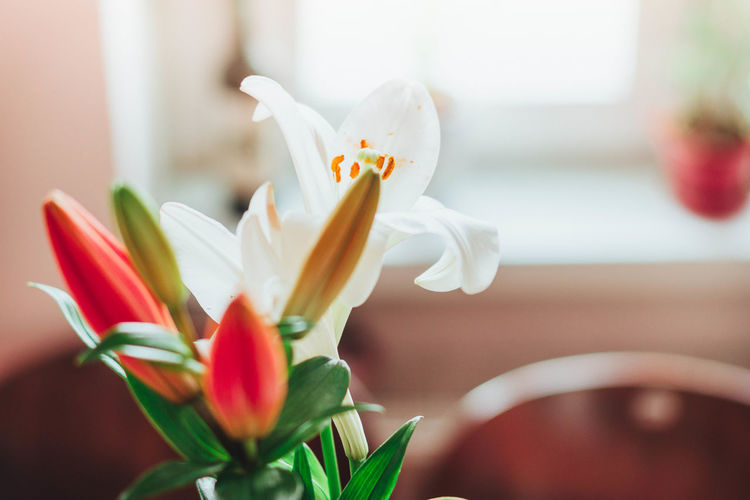 Beauty In Nature Blooming Close-up Day Day Lily Flower Flower Head Focus On Foreground Fragility Freshness Green Green Living Growth Healthy Lifestyle Indoors  Interior Design Life Nature No People Petal Plant Plantlife Plants Stamen Urban Jungle