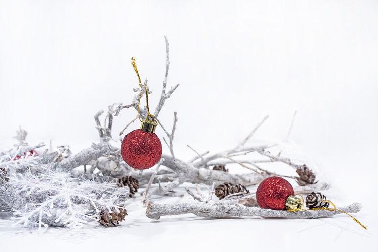 Snow Red Winter