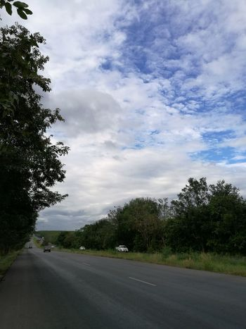 Tree Nature Sky No People Green Color Cloud - Sky Beauty In Nature Growth Outdoors Day Roadside Roads Road Beauty In Nature Low Angle View Tree Backgrounds Highways And Byways Highways&Freeways Highway 1