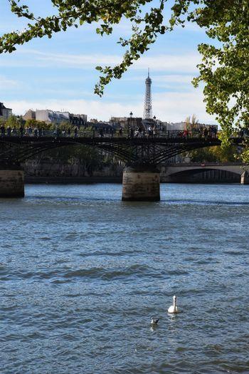 Seine...