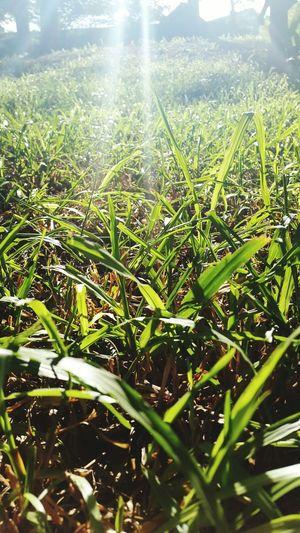 """""""Grass"""" Growth"""