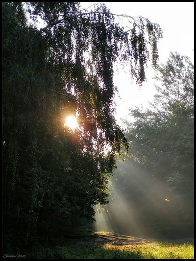 Morning Sun Reflection Nature Nature_perfection Nature_collection EyeEm Nature Lover Exceptional Photographs From My Point Of View Greenery Eye4photography  Eyeemphotography Tree And Sky Capturing Movement Taking Photos Tree_collection  Relaxing Enjoying Life Mobilephotography Xiaomi R3 Photo Poland Silesia