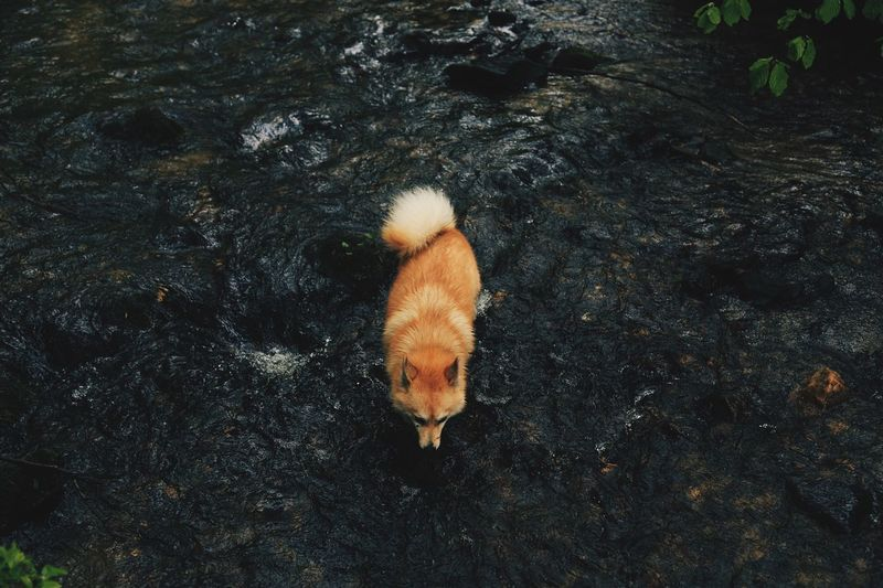 High angle view of a dog in water