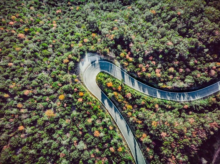 High angle view of bridge amidst trees in city
