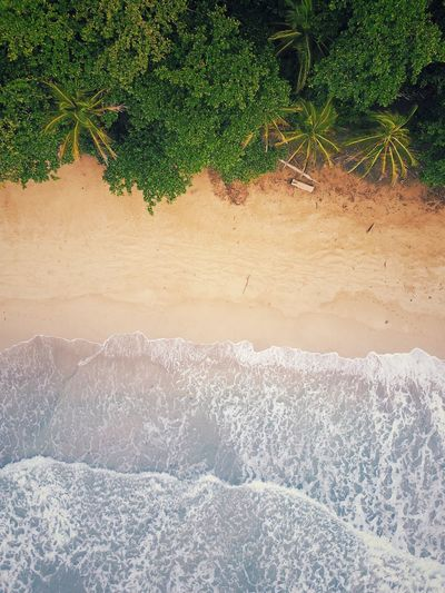 Nature Beauty In Nature No People Tranquil Scene Tranquility Scenics Day Outdoors Sand Water Tree From Above  Costa Rica Enjoying Life Beach Love The World Ocean View Nature Photography Nature_collection From Above  Rainforest Paradise