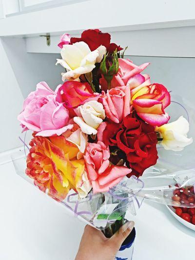 Flower Human Hand Multi Colored Close-up Rose - Flower Rose Petals Petal