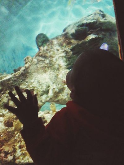 Childhood Baby Zoo Aquarium Close-up View Oceanlife Fish Underwater Amazing View Sea Kids Kids Being Kids Water Beautiful Alone Peeking Through Relaxing Good Times