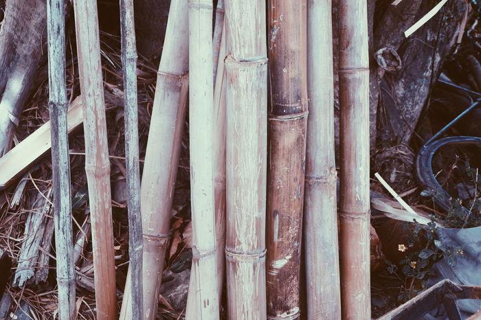 Fujifilm X-a2 EyeEm Gallery Outdoors Bamboo Trees