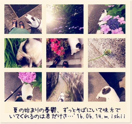夏の始まりの憂鬱、ずっとそばにいて味方で いてくれるのは君だけさ…'16.06.14.m.ishii