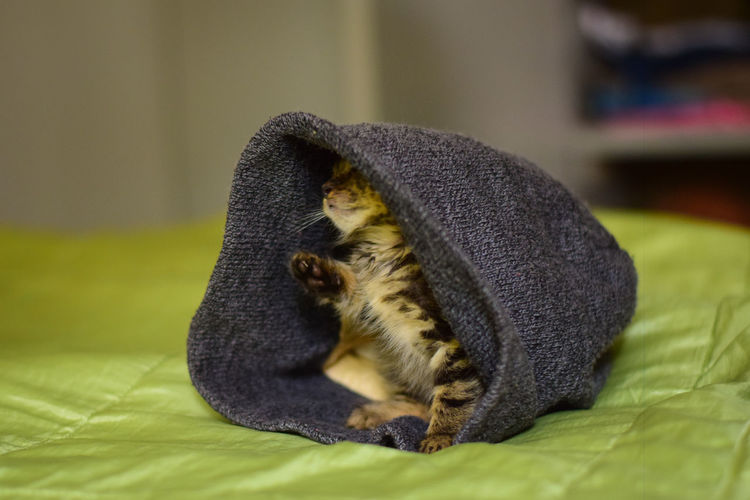 New baby kitten in a hoodie Cats Of EyeEm Animal Animal Themes Bed Cat Cat Lovers Close-up Domestic Domestic Animals Domestic Cat Feline Focus On Foreground Full Length Green Color Indoors  Kitten Mammal No People One Animal Pets Relaxation Tabby Textile Vertebrate Whisker