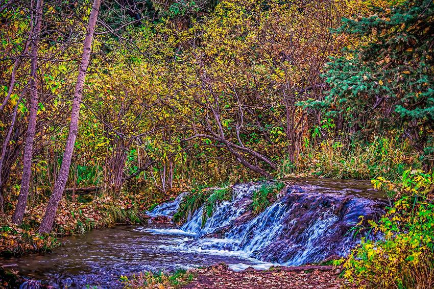 Fall Creek Big Hill Springs Provincial Park Cochrane Trees
