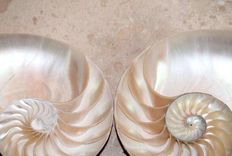 High angle view of shells