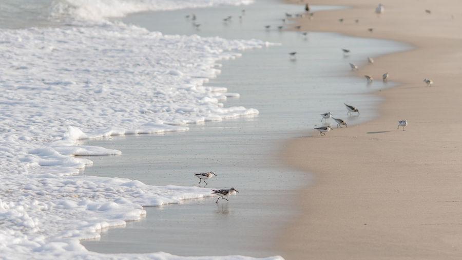 Piper on beach