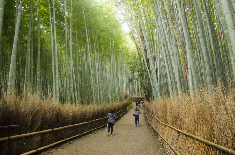 Rear view of people walking on bamboo forest