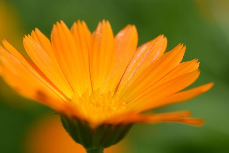 Orange Beauty