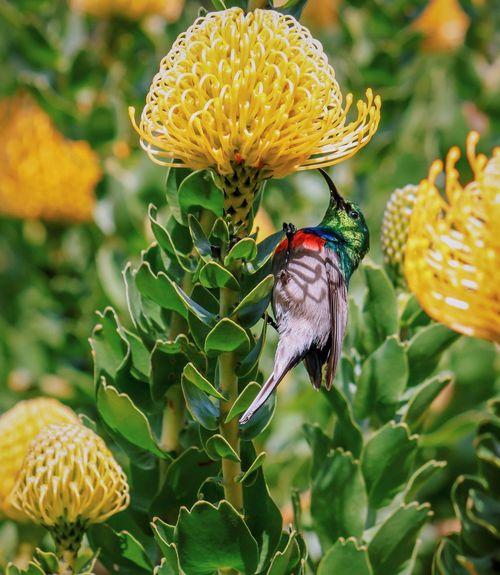Little cutie Bird Flower Animals In The Wild Wildlife Focus On Foreground Nature Photography Nature_collection Nature Flowers Birds Botanical Gardens Kirstenbosch South Africa Plant