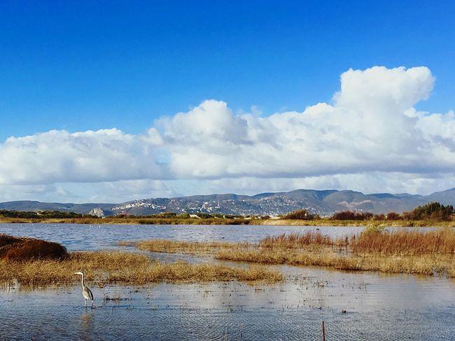 Lagunita de Ensenada después de varios días de lluvia Landscape Landscape_photography Ensenada Paisaje Pajaro Bird